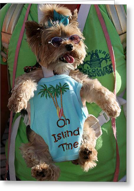 Key West Greeting Cards - Key West Dog Greeting Card by Bob Slitzan