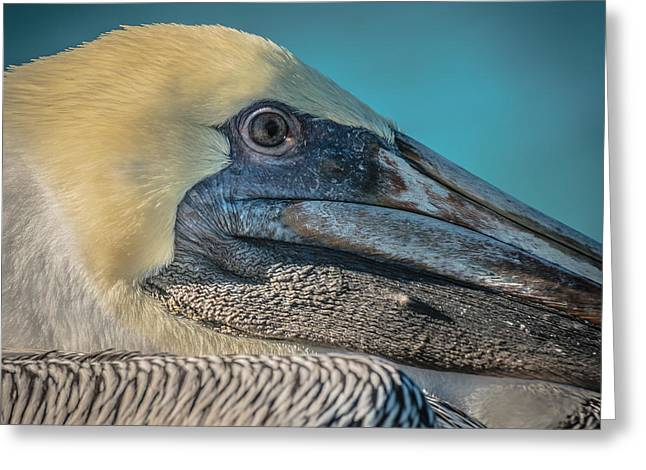 Key West Pelican Closeup - Square - Hdr Style Greeting Card by Ian Monk