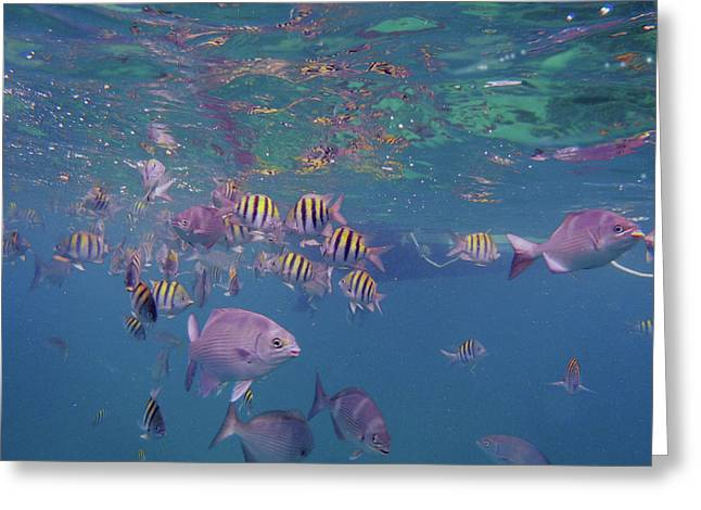 Reef Fish Photographs Greeting Cards - Keys Reef Greeting Card by Carey Chen