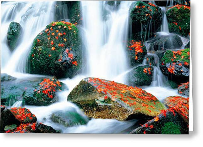 Moist Greeting Cards - Kibune River Fall Colors Kyoto Sagano Greeting Card by Panoramic Images
