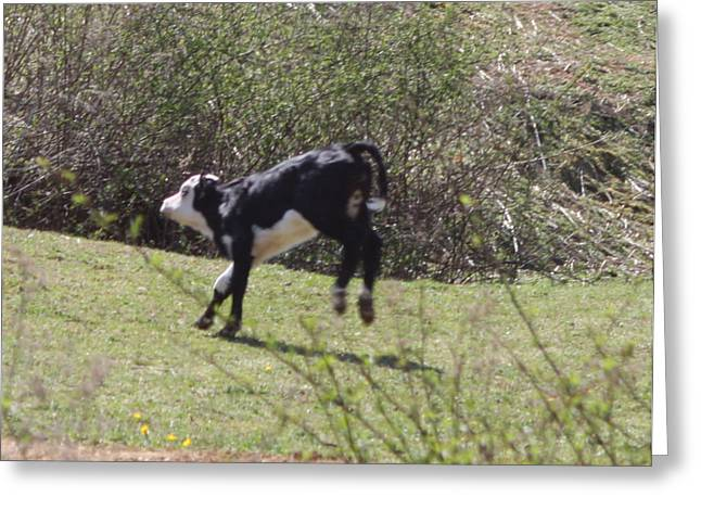 Photography Glass Greeting Cards - Kicking up her heels Greeting Card by Lee Hartsell