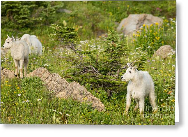 Natural Focal Point Photography Greeting Cards - Kids in Glacier National Park 3 Greeting Card by Natural Focal Point Photography