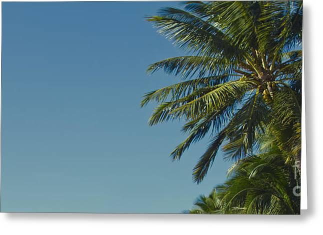 Niu Greeting Cards - Kihei Coconut Palms Greeting Card by Sharon Mau