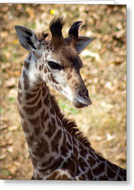 Greenville Zoo Greeting Cards - Kiko Greeting Card by Lynne Jenkins