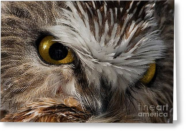 Amherst Greeting Cards - Killer Look... Greeting Card by Nina Stavlund