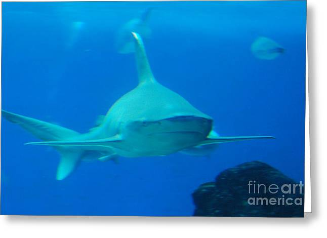 Snorkel Greeting Cards - Killer Shark Underwater Greeting Card by DejaVu Designs