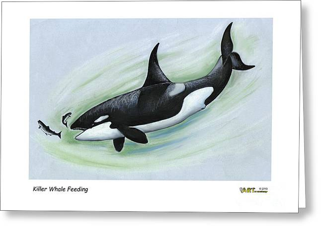 Whale Pastels Greeting Cards - Killer Whale Feeding Greeting Card by Art  MacKay