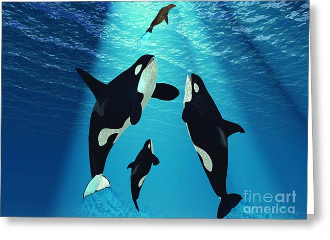 Sea Creature Pictures Greeting Cards - Killer Whales Greeting Card by Corey Ford
