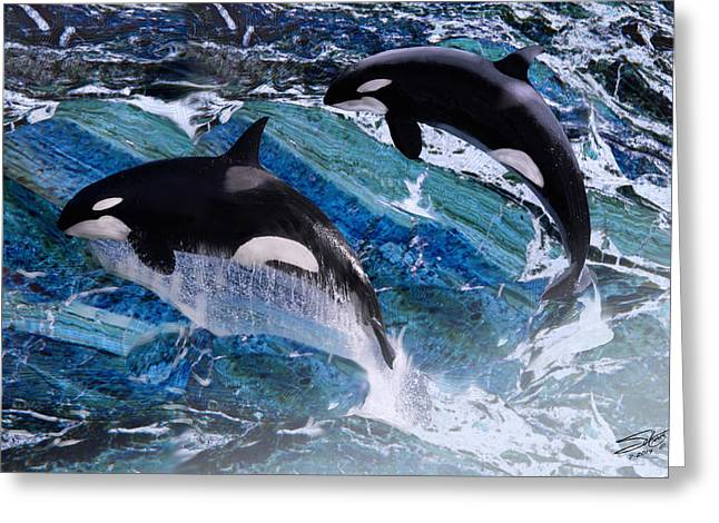 Killer Whale Greeting Cards - Wild Orca Whales of Florida Greeting Card by Matthew Schwartz