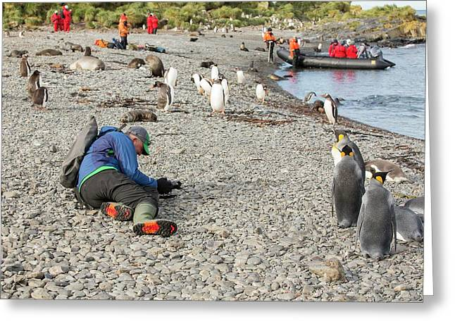 King And Gentoo Penguins Greeting Card by Ashley Cooper
