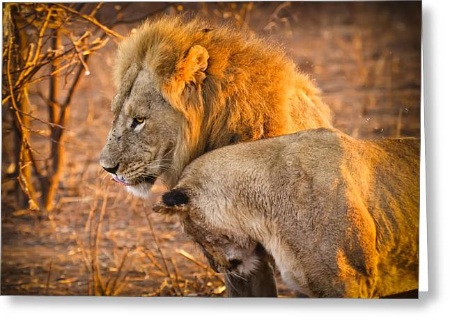 Felines Photographs Greeting Cards - King and Queen Greeting Card by Adam Romanowicz