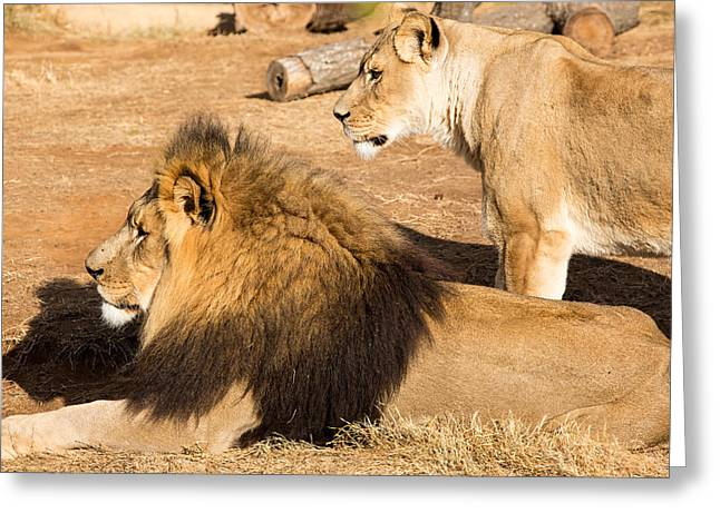 The Lion Witch Wardrobe Greeting Cards - King and Queen Greeting Card by John Ferrante