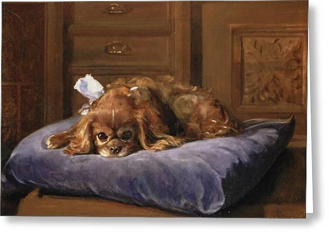 Cushion Greeting Cards - King Charles Spaniel Oil Greeting Card by C. Fulton