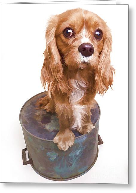 Puppy Dog Eyes Greeting Cards - King Charles Spaniel Puppy Greeting Card by Edward Fielding