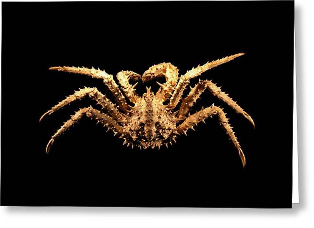 Black Top Greeting Cards - King crab Greeting Card by Science Photo Library