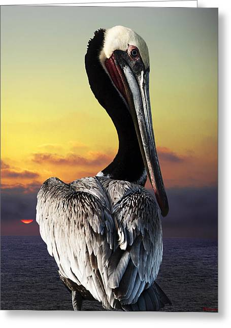 Pelicaniformes Greeting Cards - King Fisher Pelican Greeting Card by Larry Butterworth