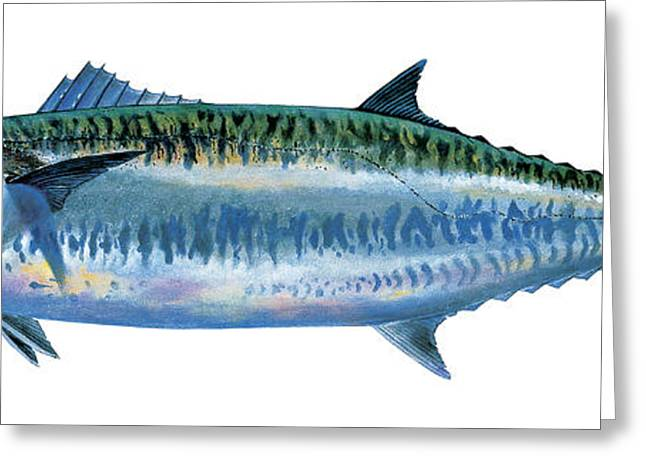 Bass Pro Shops Greeting Cards - King Mackerel Greeting Card by Carey Chen