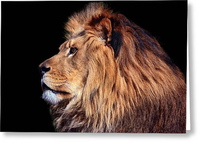 Featured Art Greeting Cards - King of Beast Greeting Card by Marcia Colelli