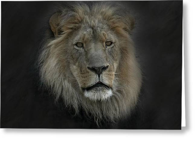 Wildcats Greeting Cards - King of Beasts Portrait Greeting Card by Ernie Echols