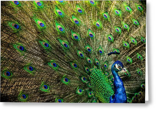 Royal Art Greeting Cards - KING of BIRDS Greeting Card by Karen Wiles