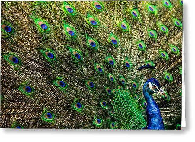 Blue And Green Greeting Cards - KING of BIRDS Greeting Card by Karen Wiles
