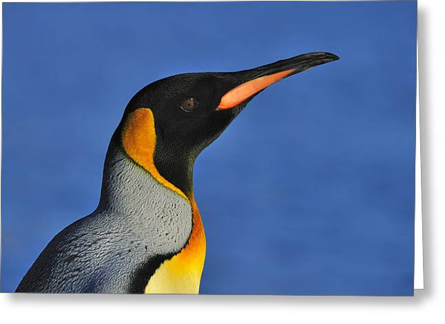 Bonding Greeting Cards - King Of The Beach Greeting Card by Tony Beck