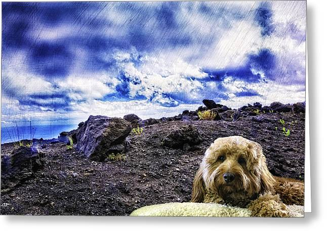 Goldendoodle Greeting Cards - King of the Mountain Greeting Card by Madeline Ellis