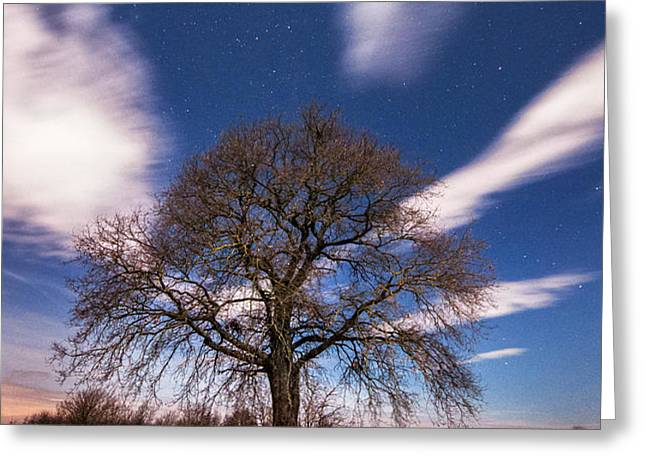 King of the night Greeting Card by Davorin Mance