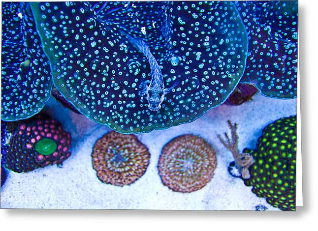 King Of The Reef Greeting Card by Guinapora Graphics