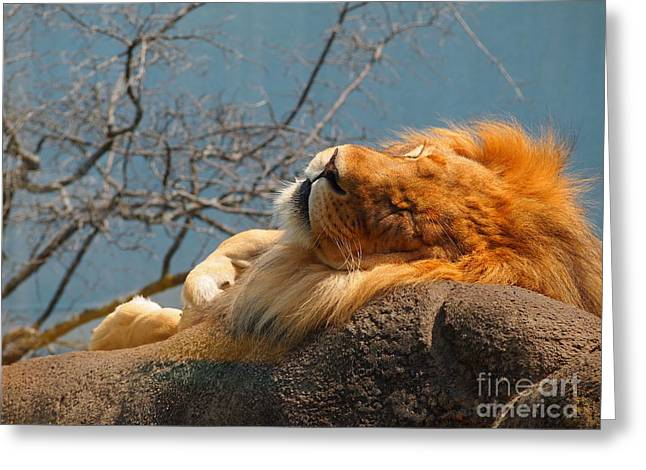 Rosamond Greeting Cards - King of the Rock Greeting Card by Jennifer Craft