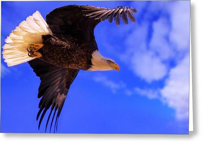 Birdwatching Greeting Cards - King Of The Sky Greeting Card by Kadek Susanto