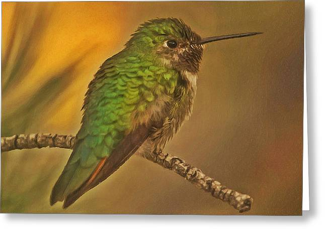Little Red River Paintings Greeting Cards - Kingfisher 1 Greeting Card by Lanjee Chee