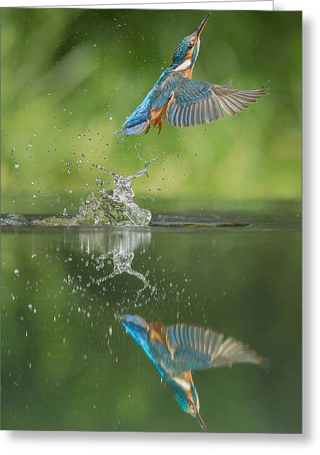 Andy Astbury Greeting Cards - Kingfisher Greeting Card by Andy Astbury