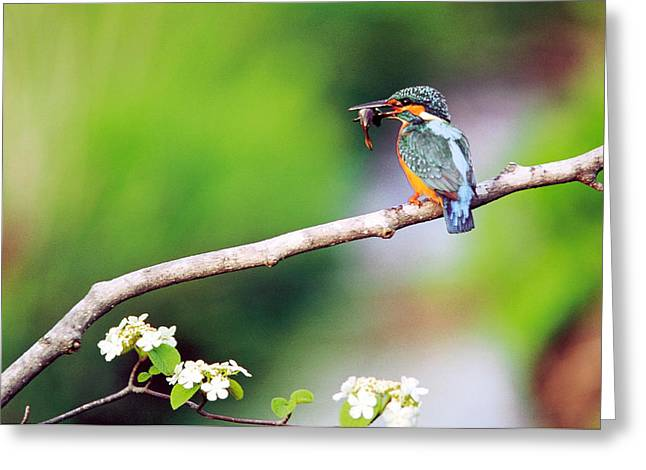 Bird On Tree Greeting Cards - Kingfisher Holding Fish In Beak Perched Greeting Card by Panoramic Images