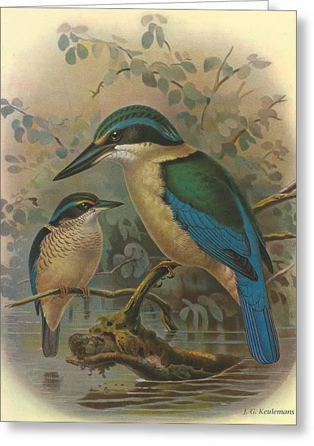 Audubon Greeting Cards - Kingfisher Greeting Card by J G Keulemans