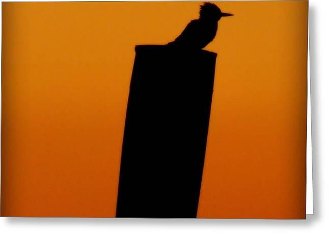 Baby Bird Greeting Cards - Kingfisher Greeting Card by Karen Wiles