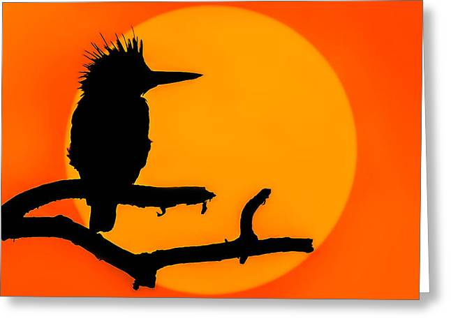 Gloaming Greeting Cards - Kingfisher Sunset Greeting Card by Brian Stevens
