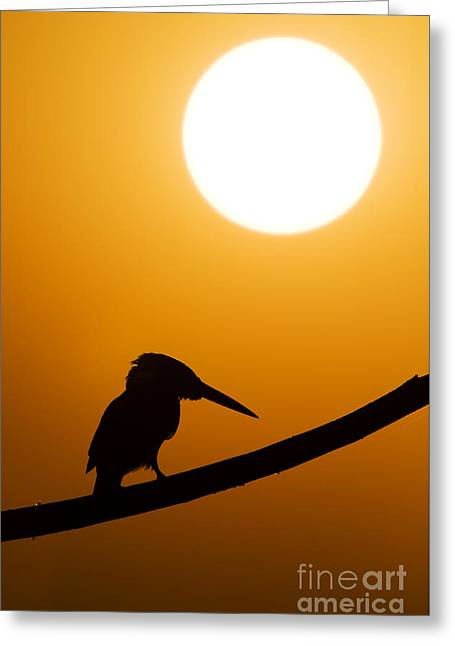 Passerines Greeting Cards - Kingfisher Sunset Silhouette Greeting Card by Tim Gainey