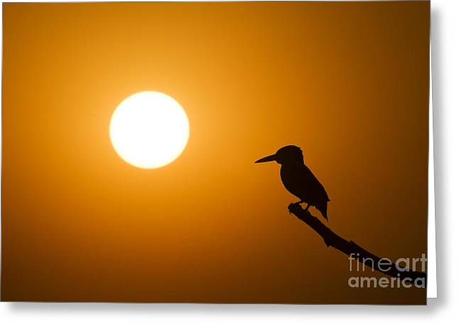 Passerines Greeting Cards - Kingfisher Sunset Greeting Card by Tim Gainey