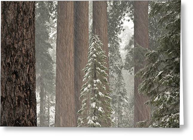 Kings Canyon National Park Greeting Cards - Kings Canyon National Park, California Greeting Card by Gregory G. Dimijian, M.D.