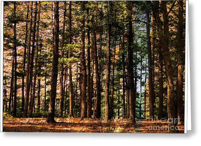New Hampshire Logging Greeting Cards - Kingston Forest Greeting Card by Marcia Lee Jones
