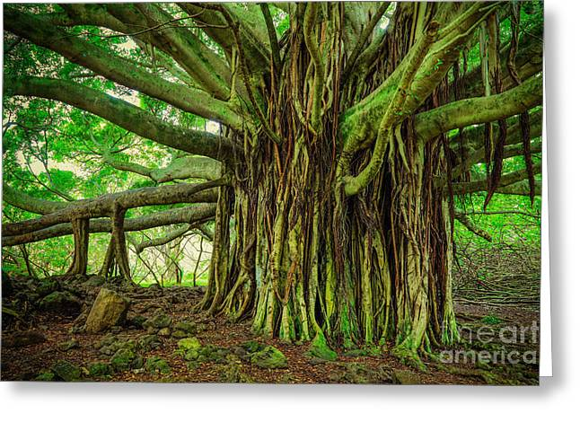 Kipahulu Banyan Tree Greeting Card by Inge Johnsson