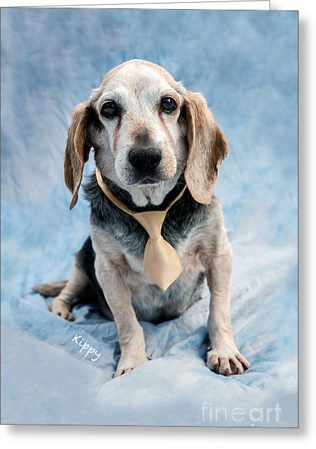 Owner Greeting Cards - Kippy Beagle Senior and Best Dog Ever Greeting Card by Iris Richardson