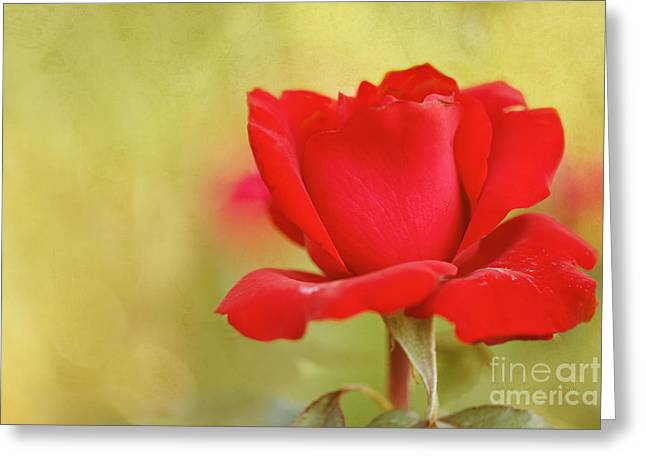 Kiss Me Greeting Card by Beve Brown-Clark Photography