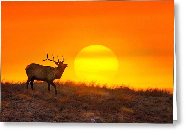 Elk Greeting Cards - Kiss The Sun Greeting Card by Kadek Susanto