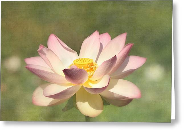 White Lotus Greeting Cards - Kissed by the Sun - Lotus Flower Greeting Card by Kim Hojnacki