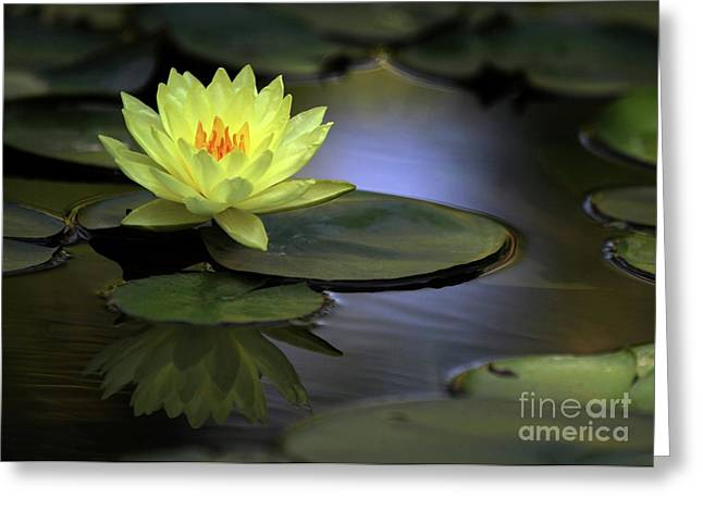 Water Garden Greeting Cards - Kissed by the Sun Greeting Card by Sabrina L Ryan