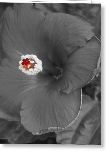 Photographs With Red. Greeting Cards - Kissed with Red Greeting Card by Laurie Pike