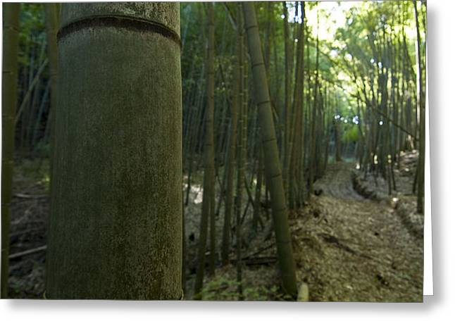 Kissing Bamboo Greeting Card by Aaron S Bedell