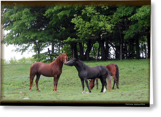 Kissing Cousins- The Paso Fino Stallions Greeting Card by Patricia Keller